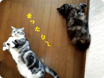 ココとリョーマ2