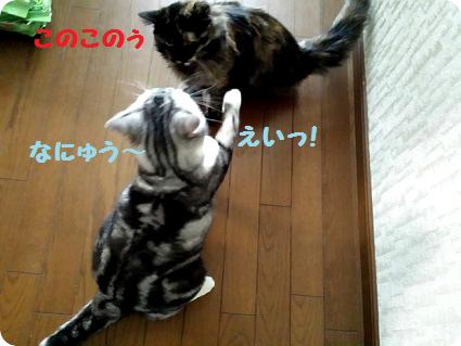 ココとリョーマ3