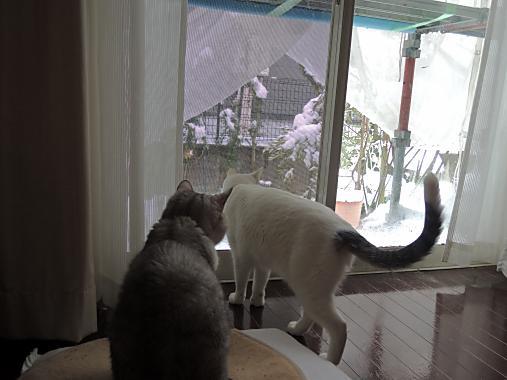 2月8日 雪見2