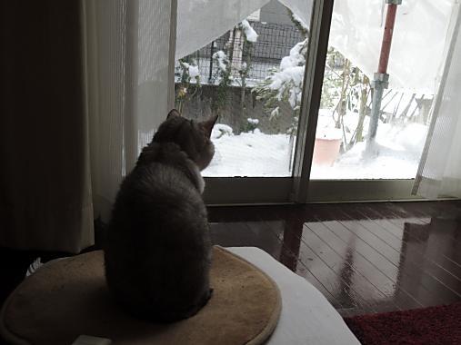 2月8日 雪見