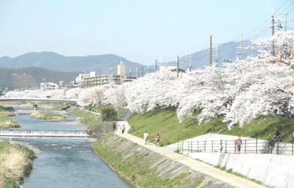 出町 桜2