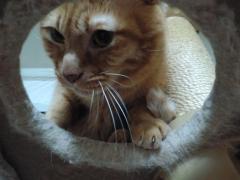 猫タワーの穴