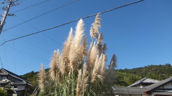 FUJI_4772.jpg