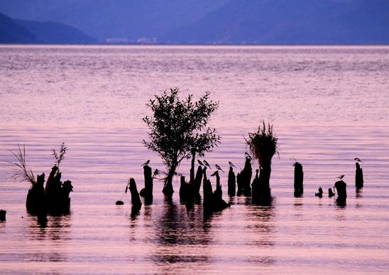 IMG_4417湖西セキレイ