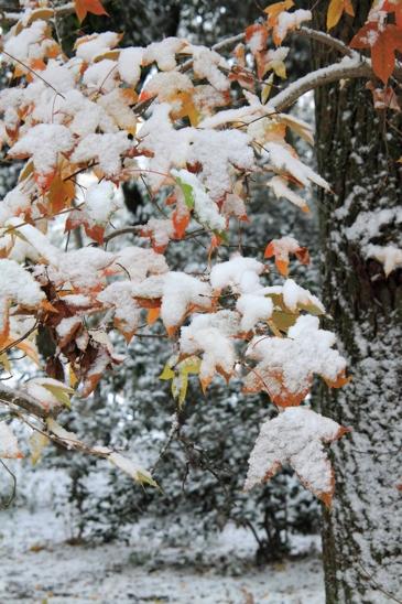 _MG_8043雪
