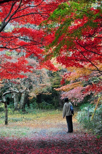 Todai2014-9.jpg