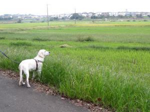 大草原の小さななず