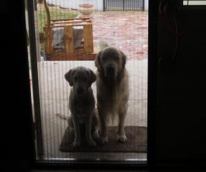 入れてください