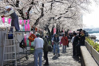 桜まつりのぼんぼりの取り付け作業