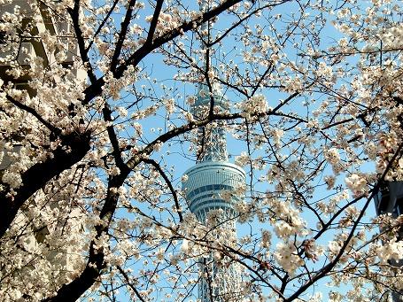 「小梅御殿」跡地の日本庭園からのタワー