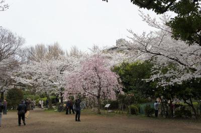 牛嶋神社の桜と東京スカイツリー