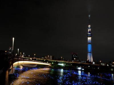 東京ホタル 2013年5月25日 桜橋にて