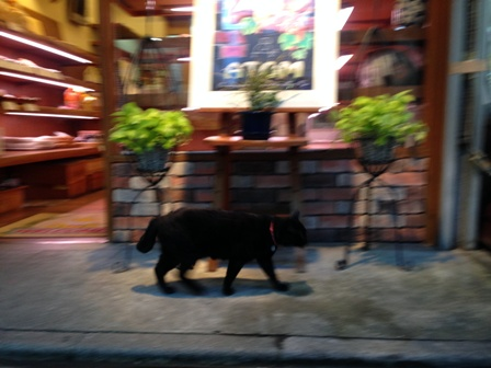 師走の黒猫1