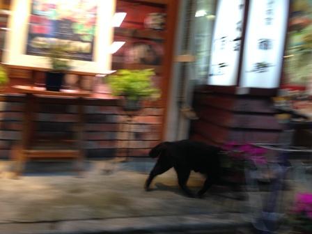 師走の黒猫2