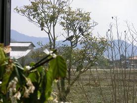 hiyodori 00406