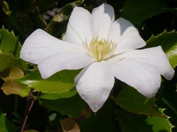 P1000369花