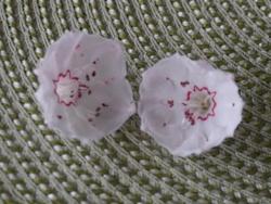 P1000462花
