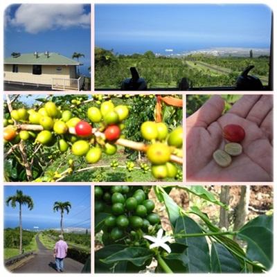 1UCCコーヒー農園