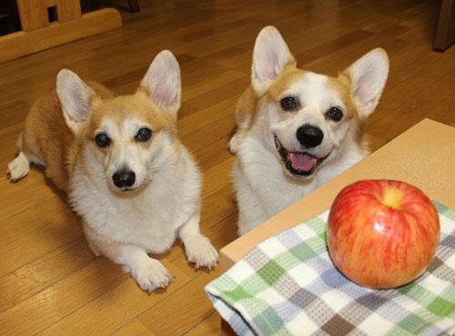リンゴと一緒に