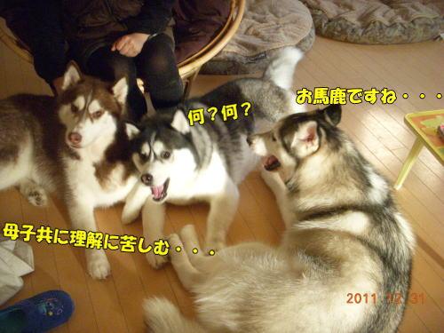 2011123117.jpg