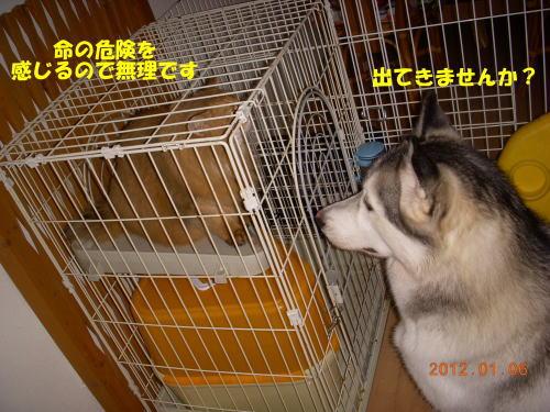 2012010506.jpg
