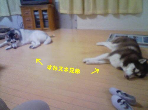 2012011506.jpg