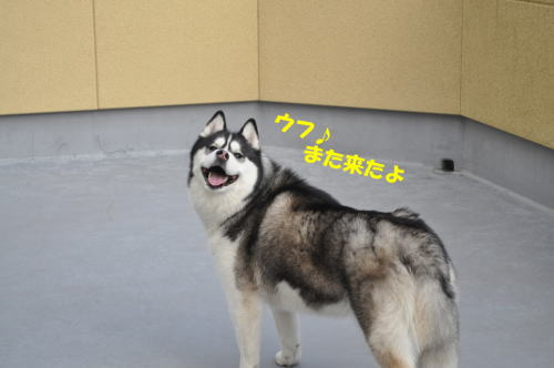 2012031102.jpg