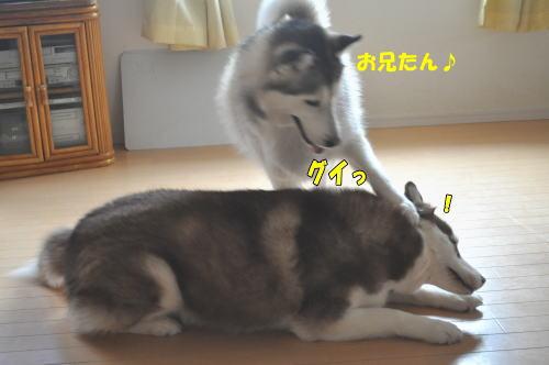 2012031112.jpg