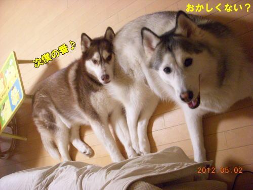 2012050223.jpg