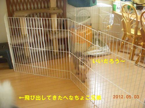 2012050307.jpg