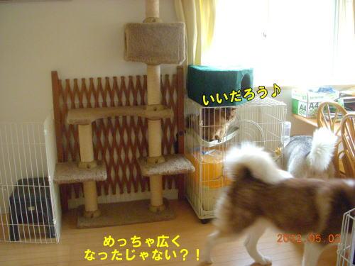 2012050312.jpg