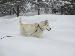 2013年3月ひるがの橇練習 124
