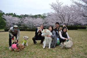 2013年3月お花見 116