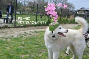 2013年4月愛ハス定例会 024a