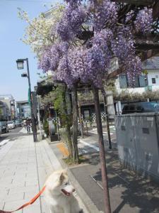 2013年GW松本・安曇野 168