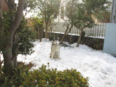 雪の子ぽとふ