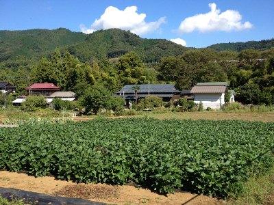 20120911畑