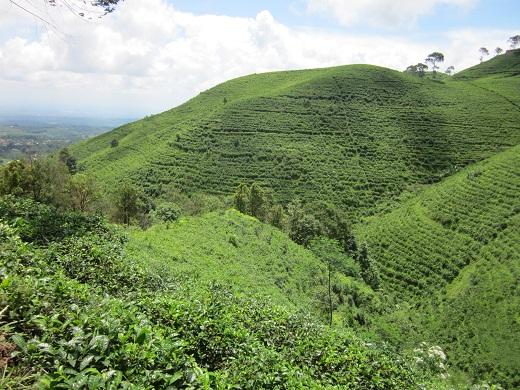 034山の上に広がるお茶畑