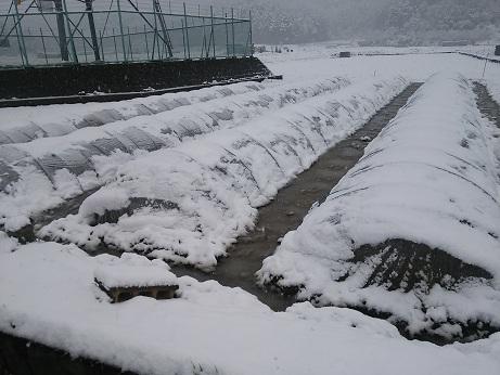 DSC_0242雪!!!