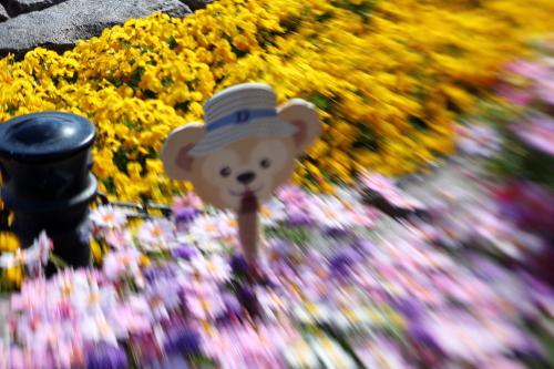ケープの春♪1