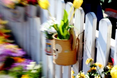 ケープの春♪2