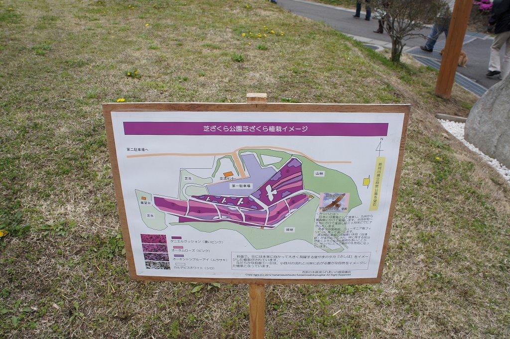 shibazakura13_06.jpg