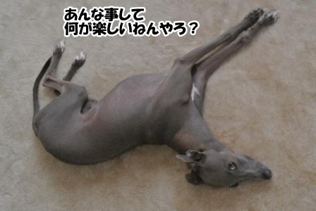 DSC_4669.jpg