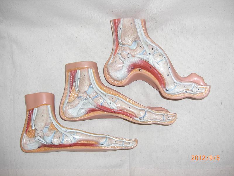 足のタイプ