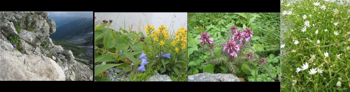3高山植物