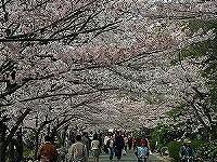 iwamoto_1.jpg
