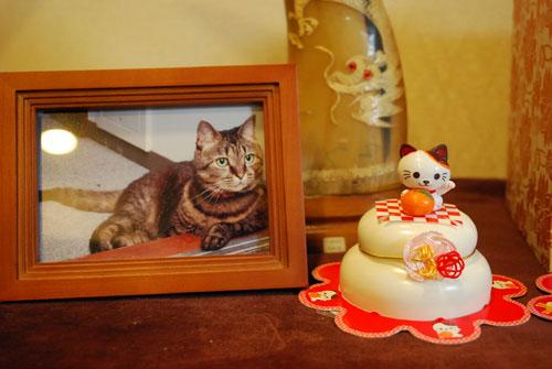 ミーちゃんと鏡餅