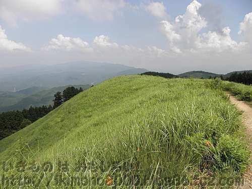 夏には緑色の岩湧山山頂の茅場