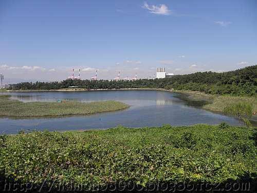 大阪南港野鳥園の北池