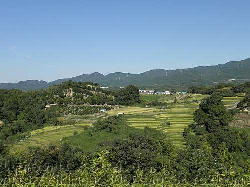 富田林市立総合スポーツ公園から見た下赤阪の棚田
